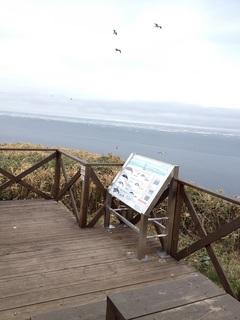 クジラの見える丘 (2).JPG